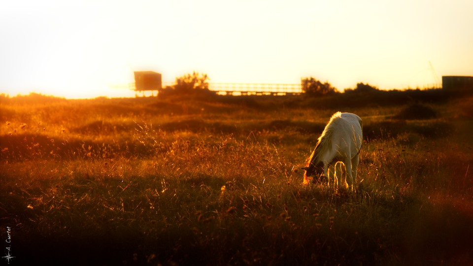 2018 09 14 IMG 5020 Horse in golden light fb
